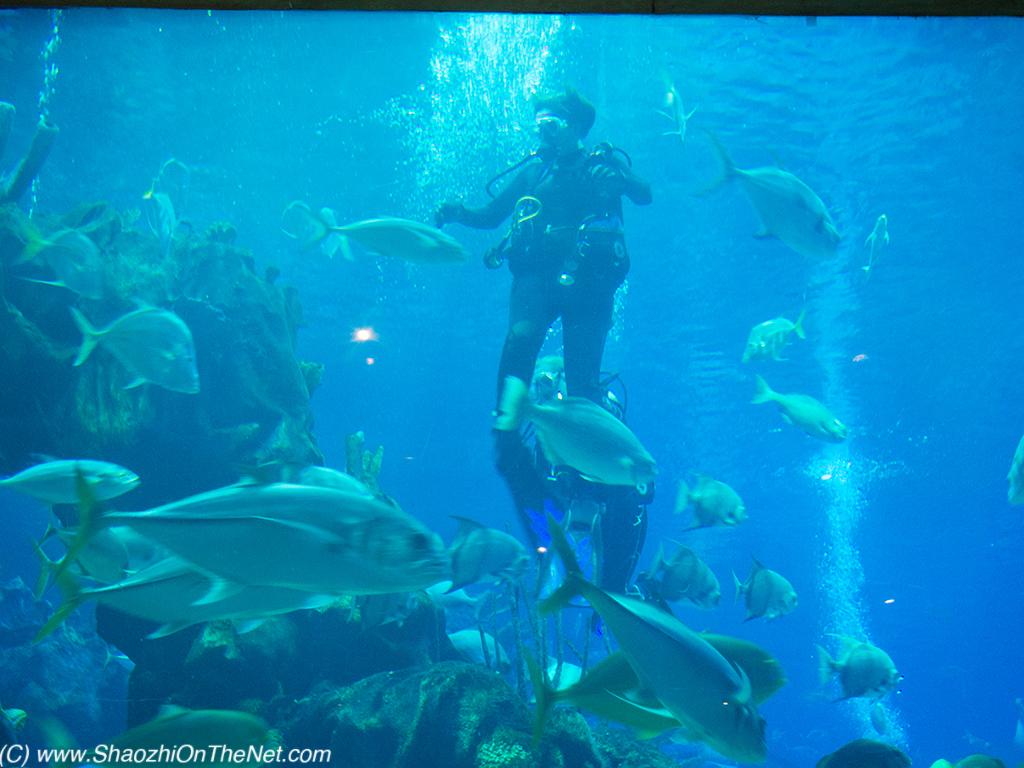 underwater restaurant disney world. Exellent Disney Walt Disney World  Coral Reef Restaurant At EPCOT For Underwater